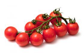 Rajčata keříčková